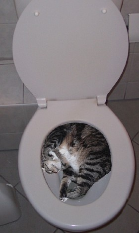 Kat In Wc.Poes In Wc Pot Lol Albumelement