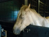 Summer me liefen lings pony:p